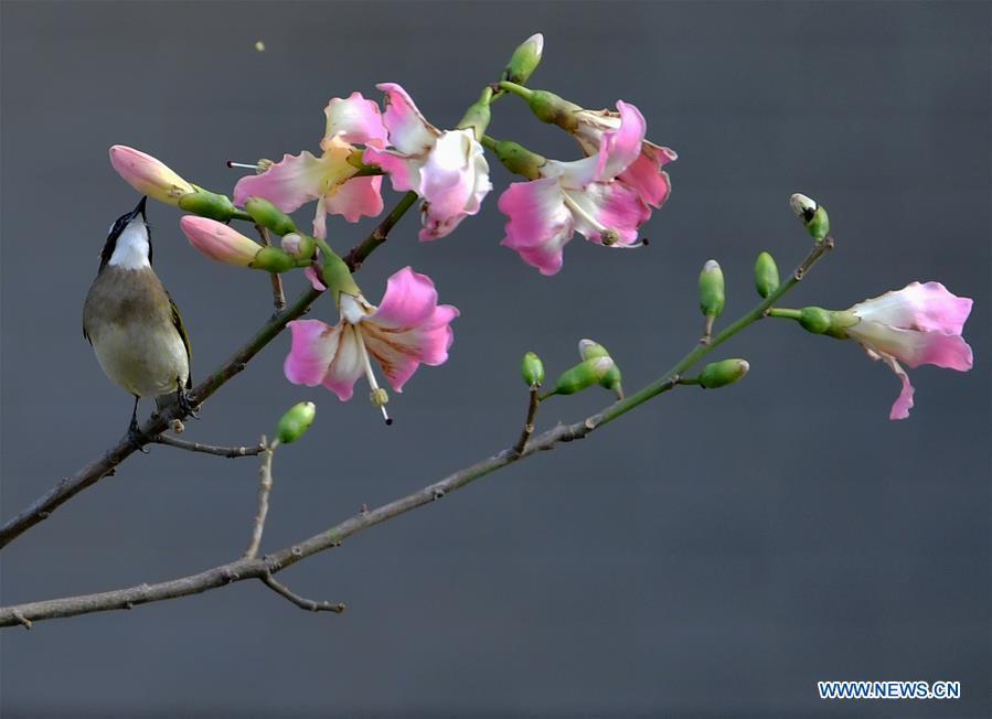 CHINA-FUJIAN-FUZHOU-WARM WEATHER-BIRDS (CN)