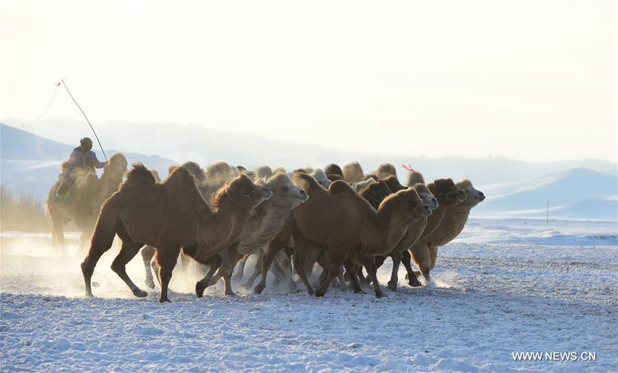 CHINA-INNER MONGOLIA-BASHANG PASTURE-PHOTOGRAPHY FESTIVAL (CN)