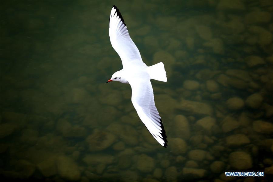 中国甘肃黄河鸟类(中国)