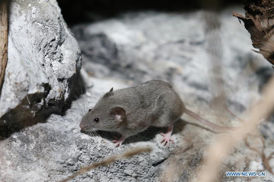 克罗地亚萨格勒布濒危物种