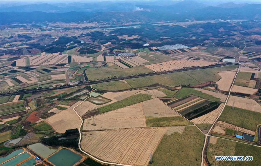 CHINA-GUANGXI-LIUZHOU-SUGARCANE (CN)