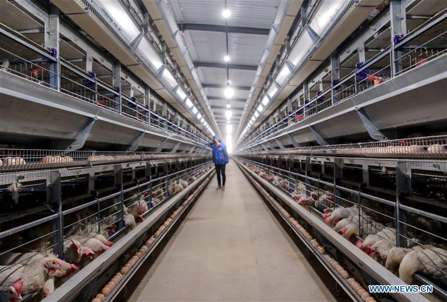 中国河北畜牧生产