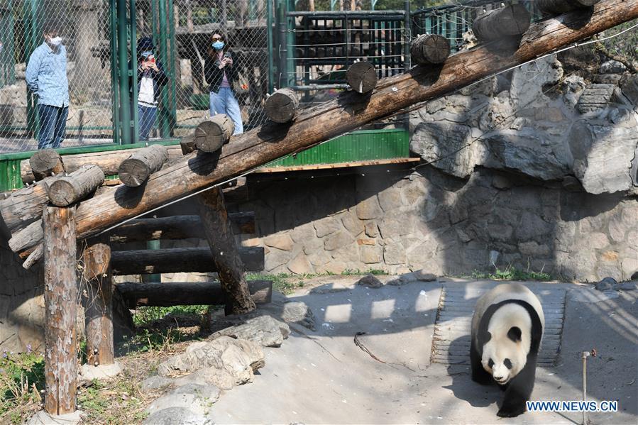 中国北京动物园再开放(CN)
