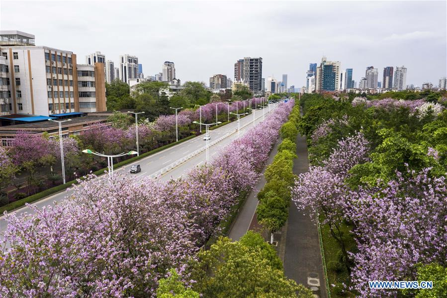CHINA-GUANGXI-LIUZHOU-REDBUD FLOWERS (CN)