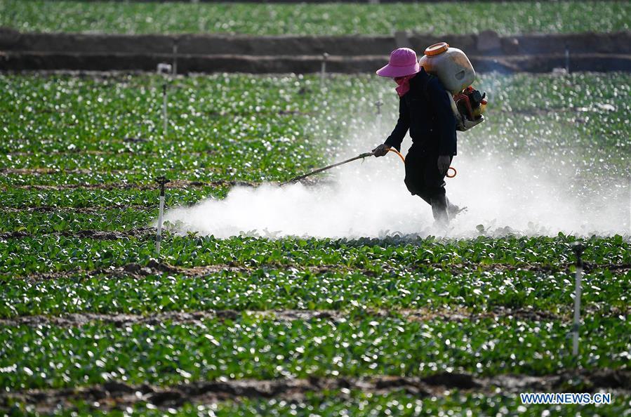 中国-宁夏-农业蔬菜种植(CN)
