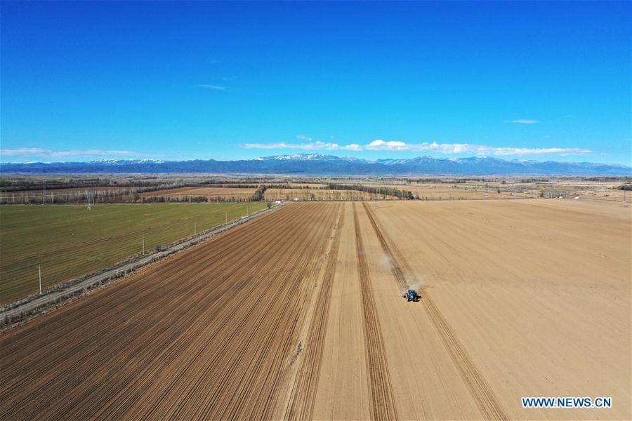 中国新疆大成恢复生产(CN)