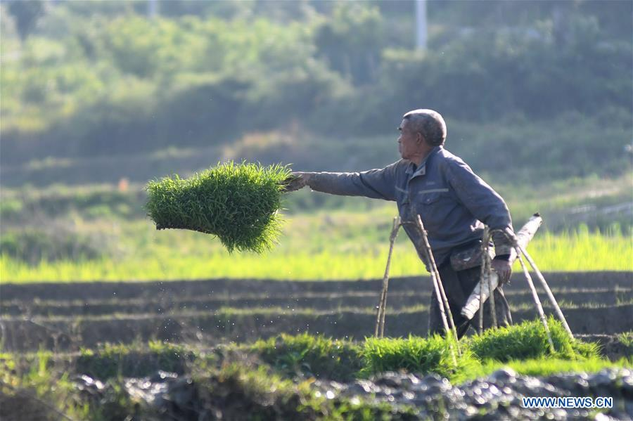 #CHINA-HUNAN-LOUDI-FARMING (CN)