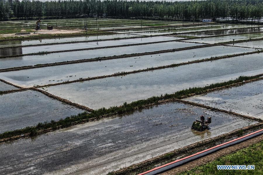 CHINA-LIAONING-RICE-TRANSPLANTING (CN)