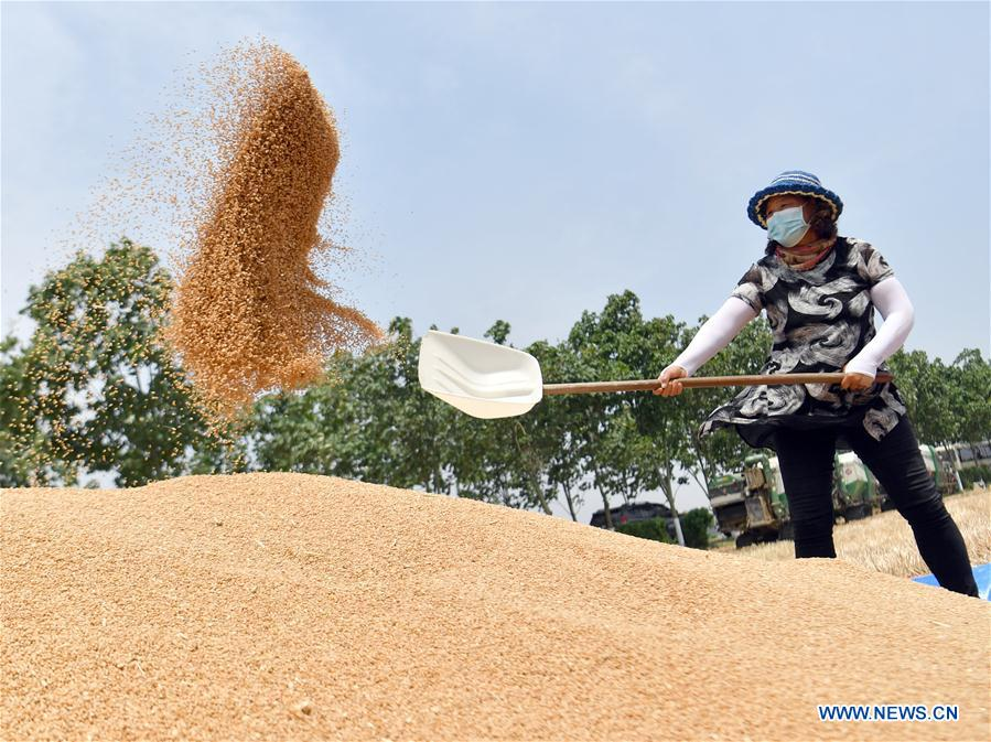 CHINA-HENAN-WHEAT-HARVEST (CN)