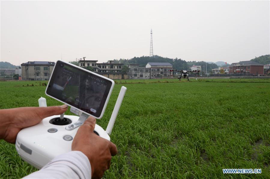 CHINA-HUNAN-XIANGXIANG-DRONE-FARMING (CN)