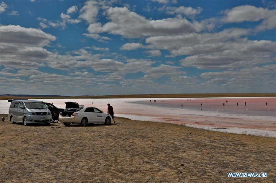 哈萨克斯坦-阿莫拉-粉红色湖景