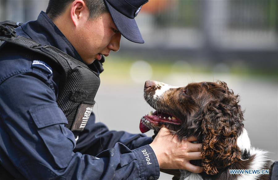 中国吉林白山边境嗅探犬(CN)