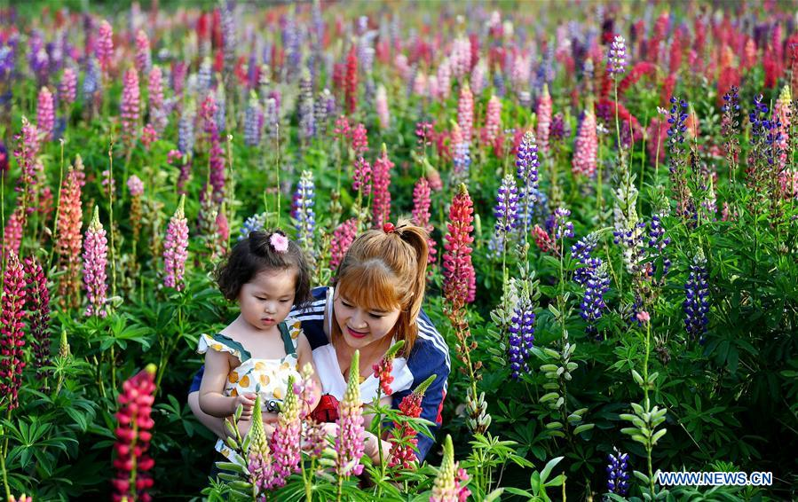 CHINA-SHAANXI-TAIBAI-LUPIN FLOWER INDUSTRY PARK (CN)
