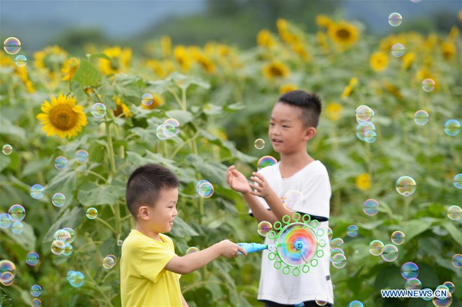 CHINA-CHANGSHA-SUNFLOWERS (CN)