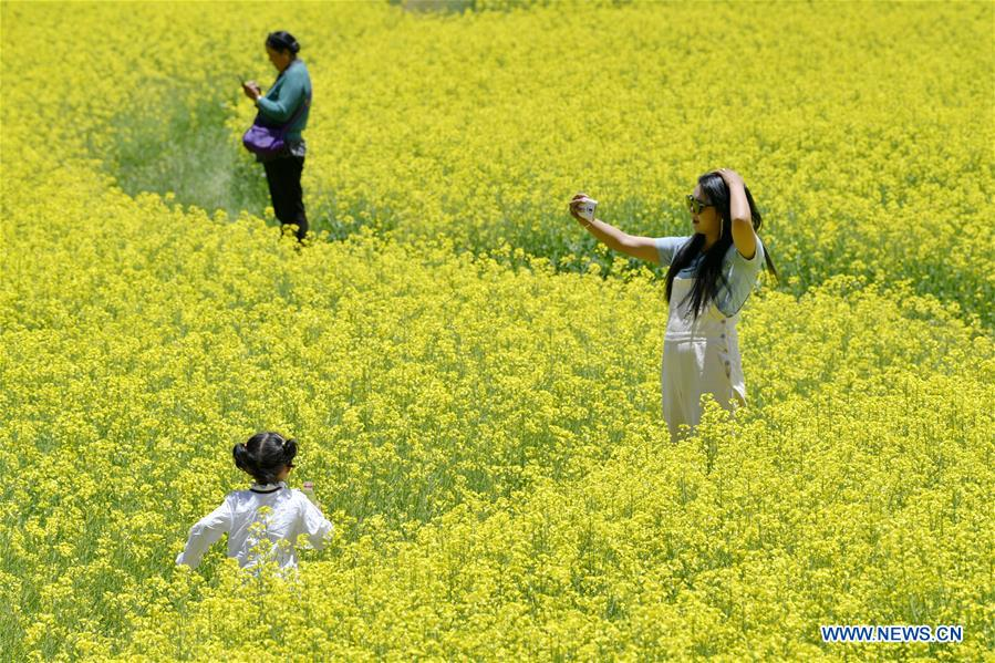 CHINA-TIBET-ZHANANG-COLE-FLOWER-FIELDS (CN)