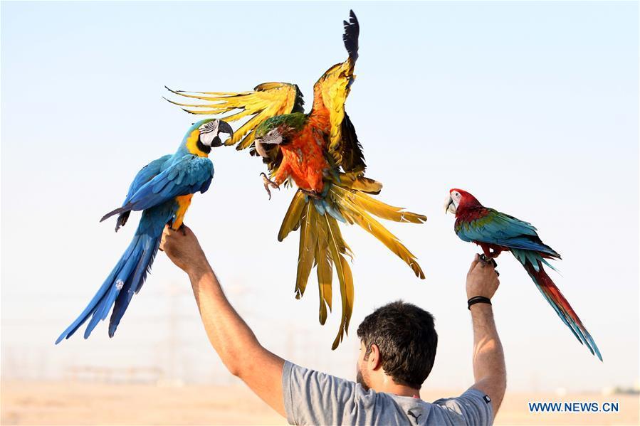 KUWAIT-MUBARAK AL-KABEER GOVERNORATE-PARROT SHOW