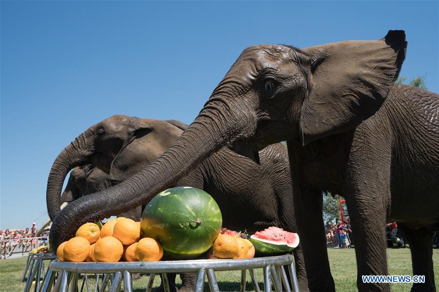 HUNGARY-BALATONLELLE-CIRCUS-ELEPHANTS