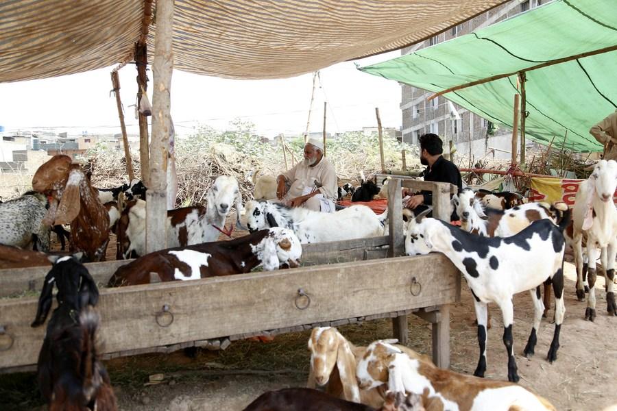 Asia Album: Livestock markets open in Pakistan before Eid al-Adha - Xinhua   English.news.cn