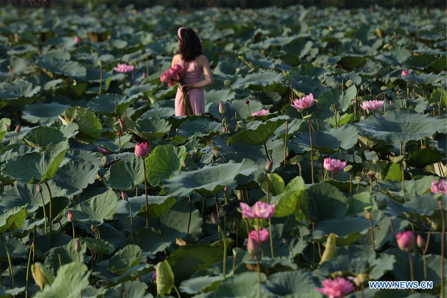 VIETNAM-HANOI-WEST LAKE-LOTUS