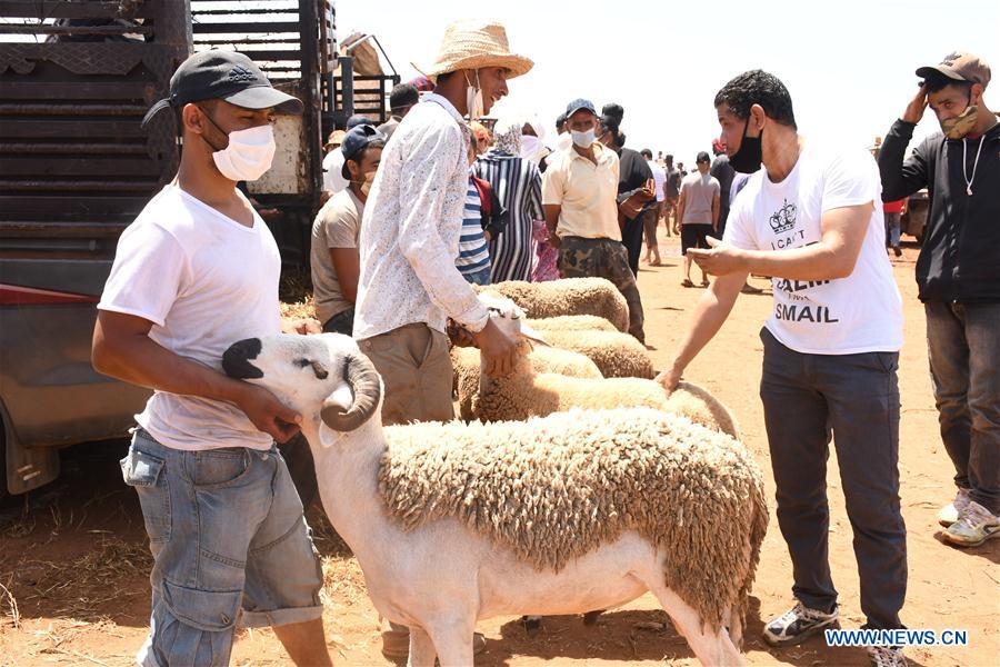 摩洛哥-拉巴特-开斋节-牲畜市场