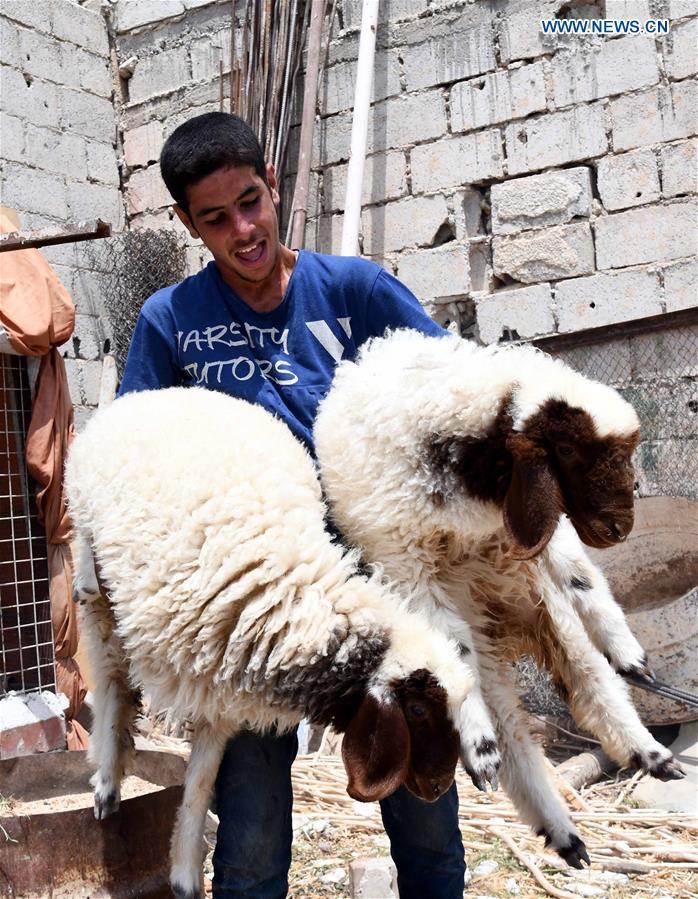 叙利亚-大马士革-开斋节-牲畜