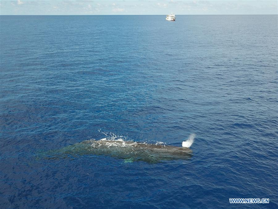SOUTH CHINA SEA-SCIENTIFIC EXPEDITION-WHALE SPECIES (CN)