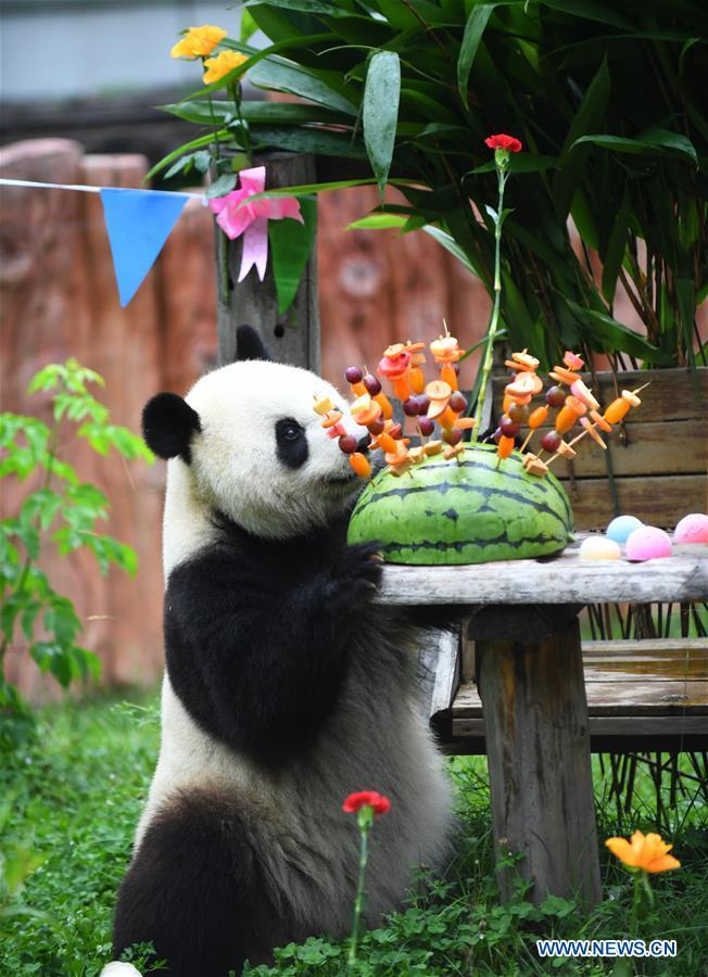 中国吉林大熊猫节(CN)