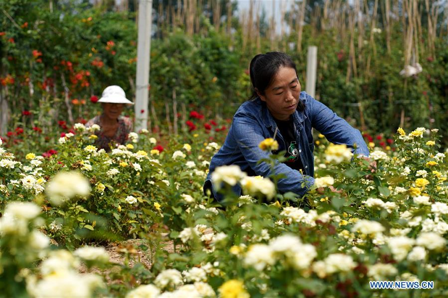CHINA-HEBEI-XINGTAI-RURAL DEVELOPMENT-ORNAMENTAL PLANTS (CN)