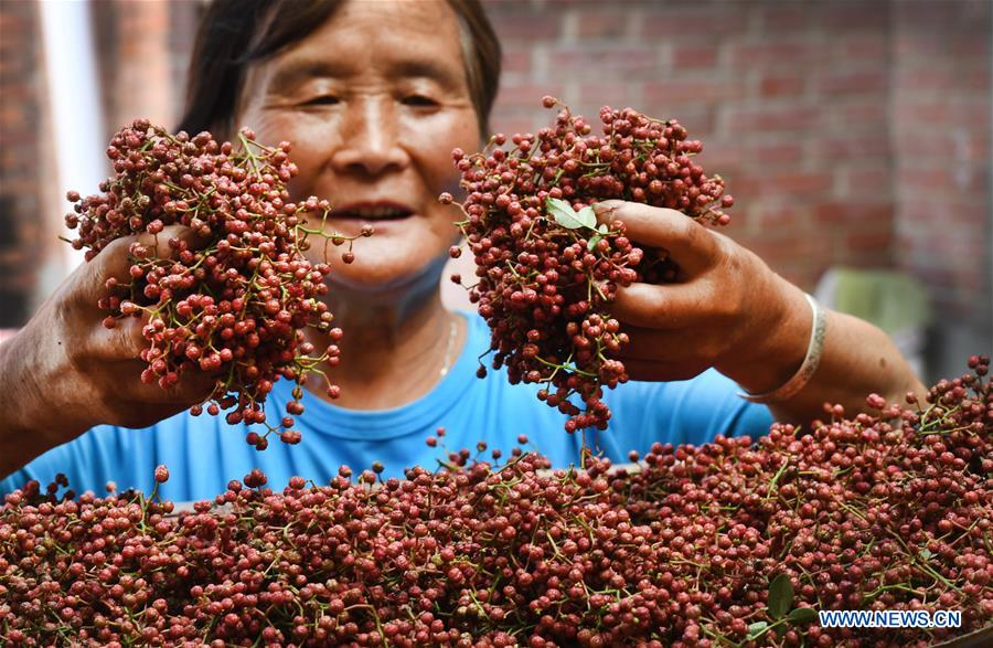 CHINA-SHAANXI-WEINAN-POVERTY ALLEVIATION-CHINESE PRICKLY ASH (CN)