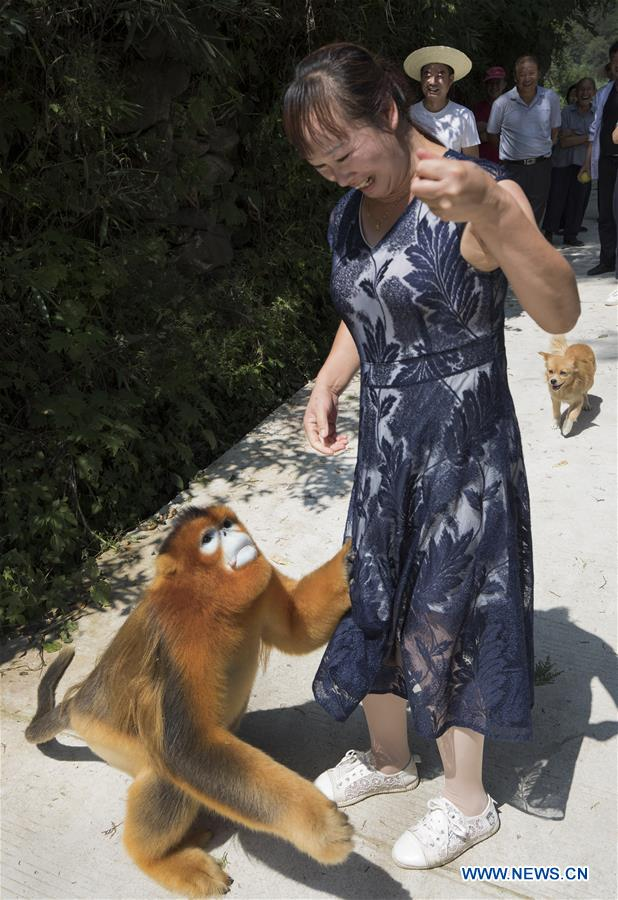 CHINA-SHAANXI-YANGXIAN-WILDLIFE-GOLDEN MONKEY (CN)