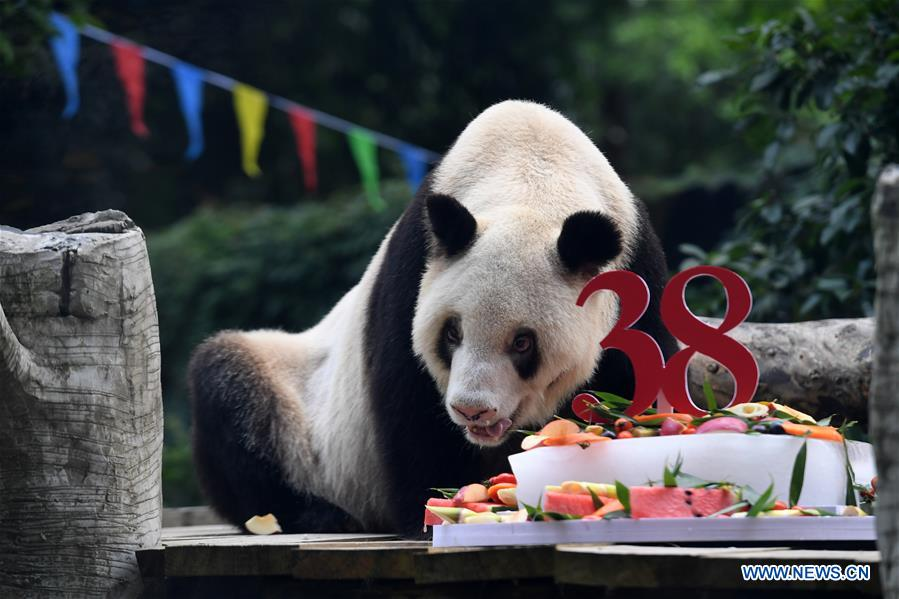 CHINA-CHONGQING-OLDEST CAPTIVE GIANT PANDA-BIRTHDAY (CN)