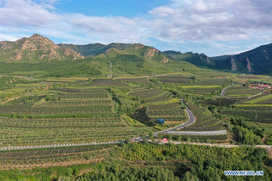 CHINA-INNER MONGOLIA-CHIFENG-GRAPE-INDUSTRY (CN)