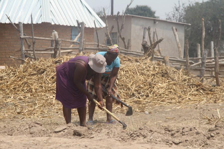 Feature: New farming concept offers Zimbabwean farmers higher yields - Xinhua | English.news.cn