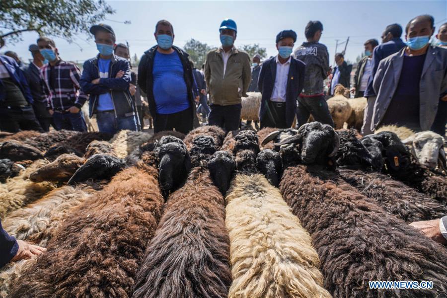 中国-新疆-首府-牛-绵羊-巴扎(CN)