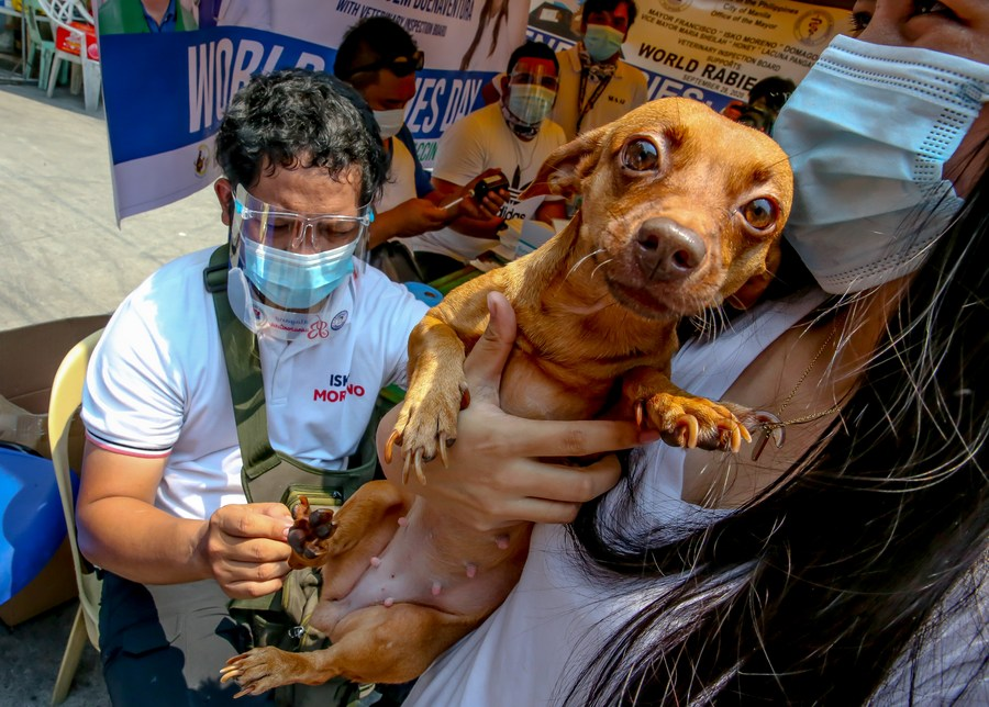 Asia Album: Pets receive free rabies vaccines in Manila, the Philippines on World Rabies Day  - Xinhua | English.news.cn