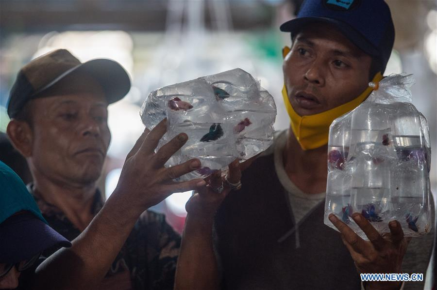 بازار ماهیان زینتی در اندونزی