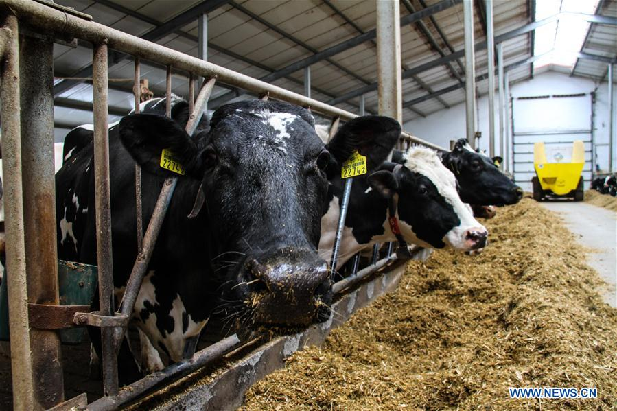 波兰-华沙-乳制品-中国出口