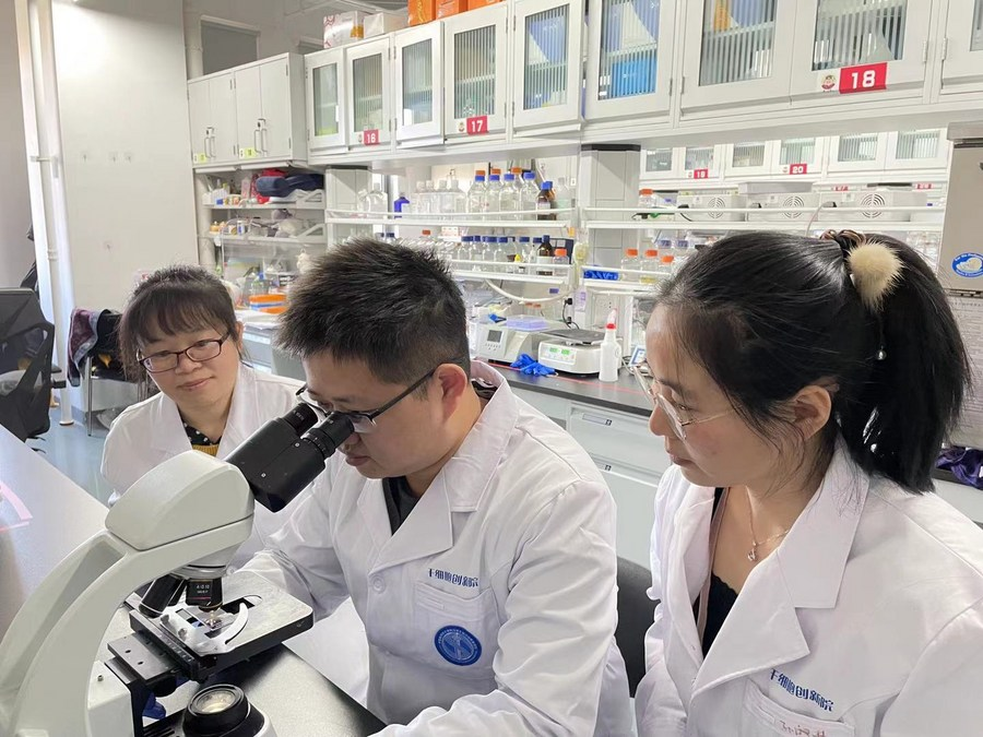 Chinese researchers discover new anti-aging gene therapy - Xinhua   English.news.cn