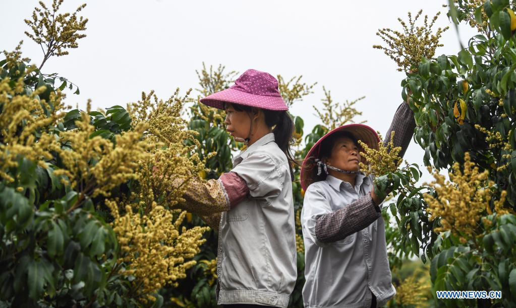 Farming Activities in Full Swing Across China