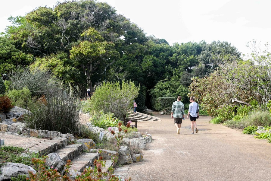 Cape Town to open up nature reserves for free to encourage exploration of nature - Xinhua   English.news.cn