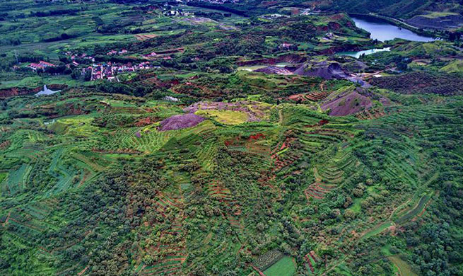 Mine areas covered with plants after reclamation and afforestation in China's Hebei