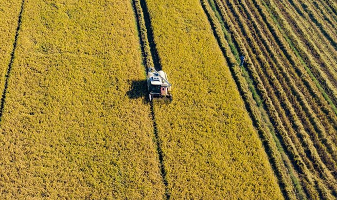 Farmers, fishermen busy with harvest across China