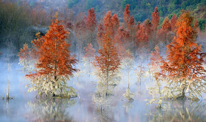 In pics: wetland of dawn redwood in Dianwei Village, SW China's Yunnan