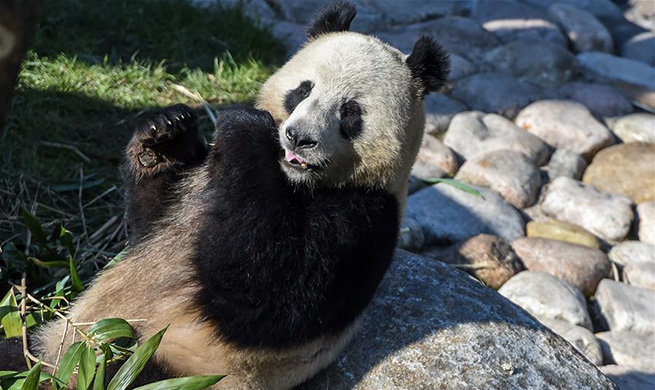 Danish Queen opens Copenhagen Panda House