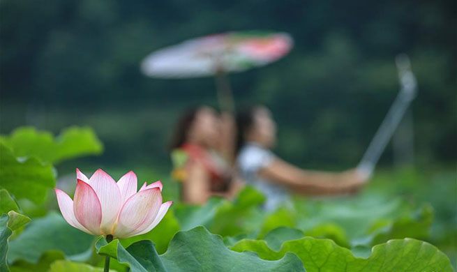 Scenery of lotus across China