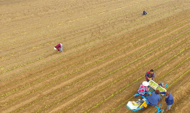 Farmers busy with work at fields during Xiaoshu in China's Shandong