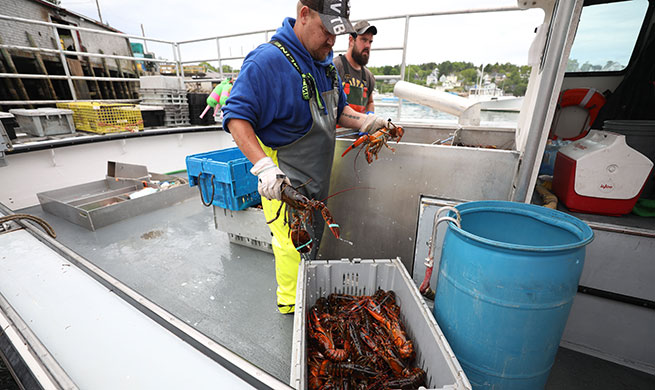 Xinhua Headlines: U.S. lobster industry bogged down after losing Chinese market in trade tensions