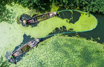 Workers clear away duckweed in Yangxiagang river in China's Zhejiang