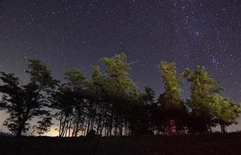 Perseid Meteor Shower in starry sky