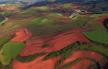 View of red land in Kunming, SW China's Yunnan
